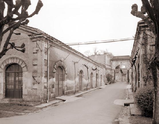 vineyard 'du Fery'