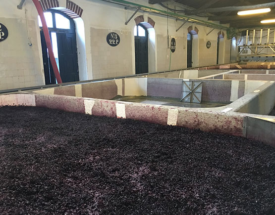 grapes for port